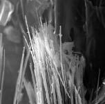 asbestos-fibres